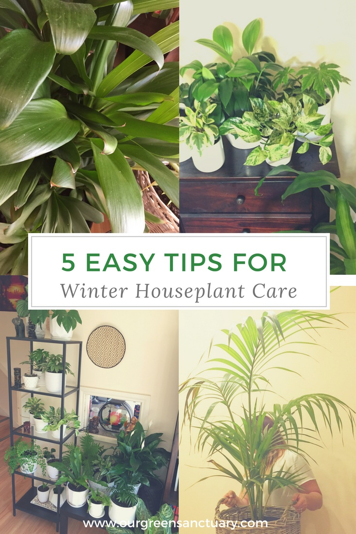 5 easy tips for winter houseplant care