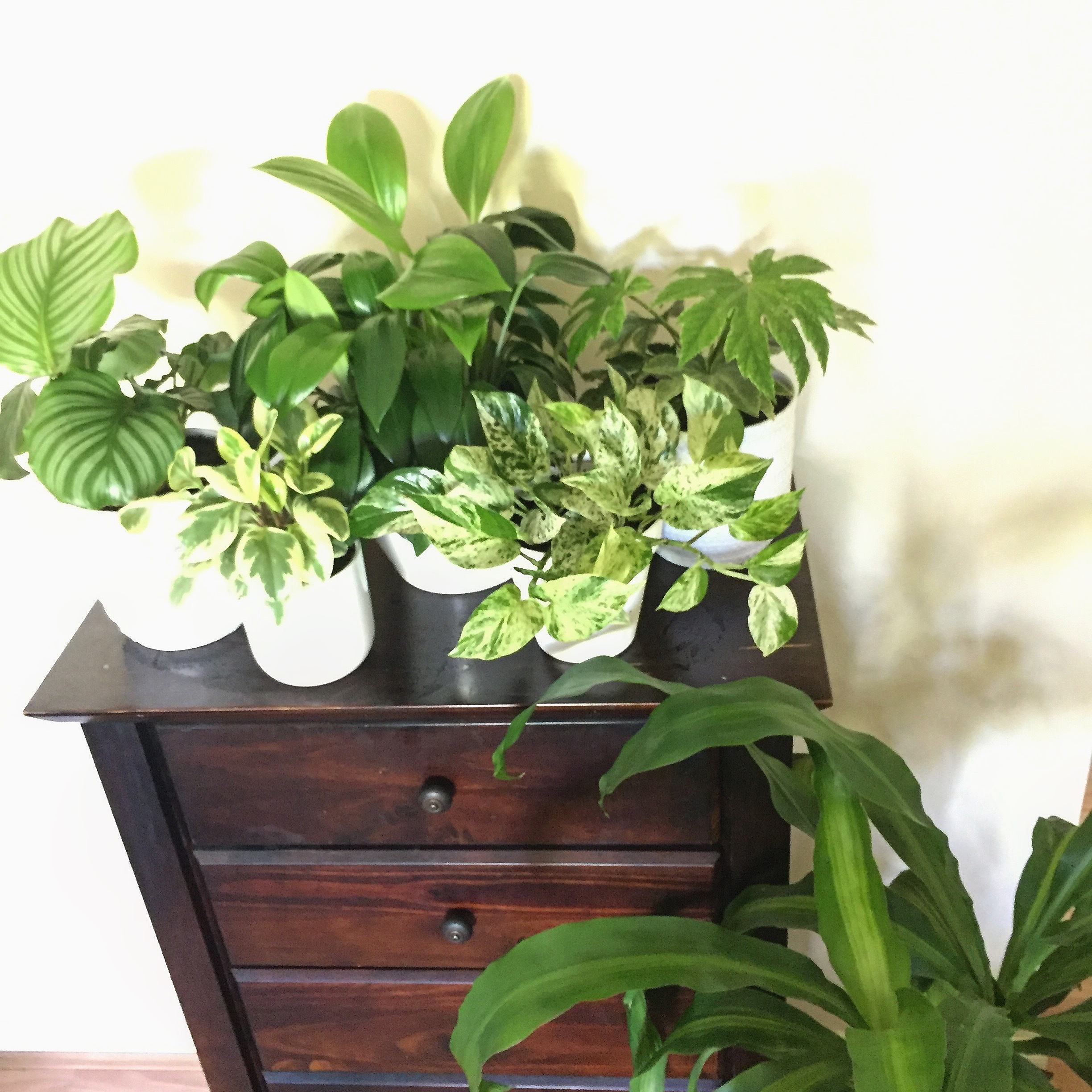 Group houseplants close together to keep them warm