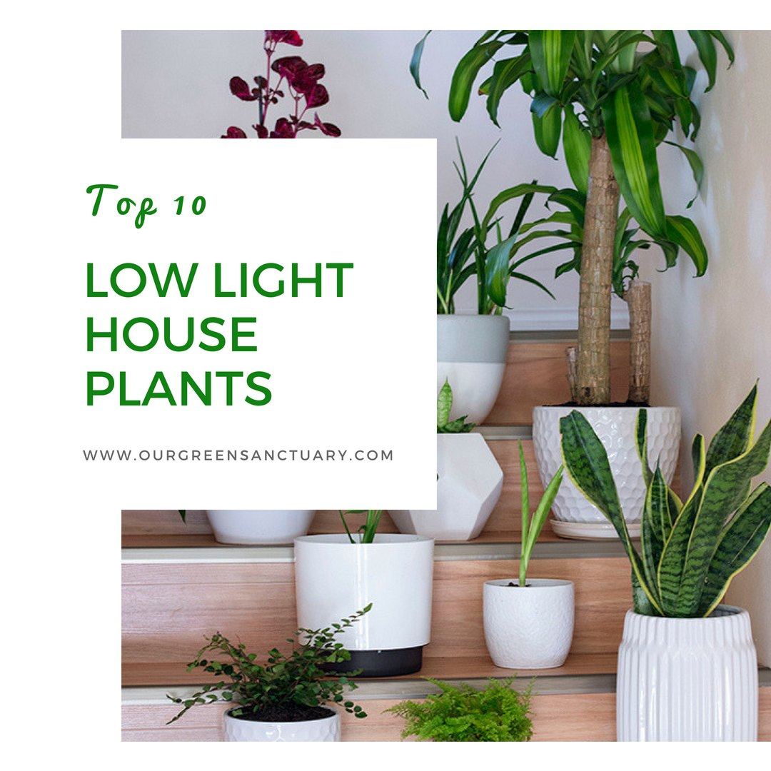 House Plants For Shady Rooms: Top 10 Low Light Houseplants