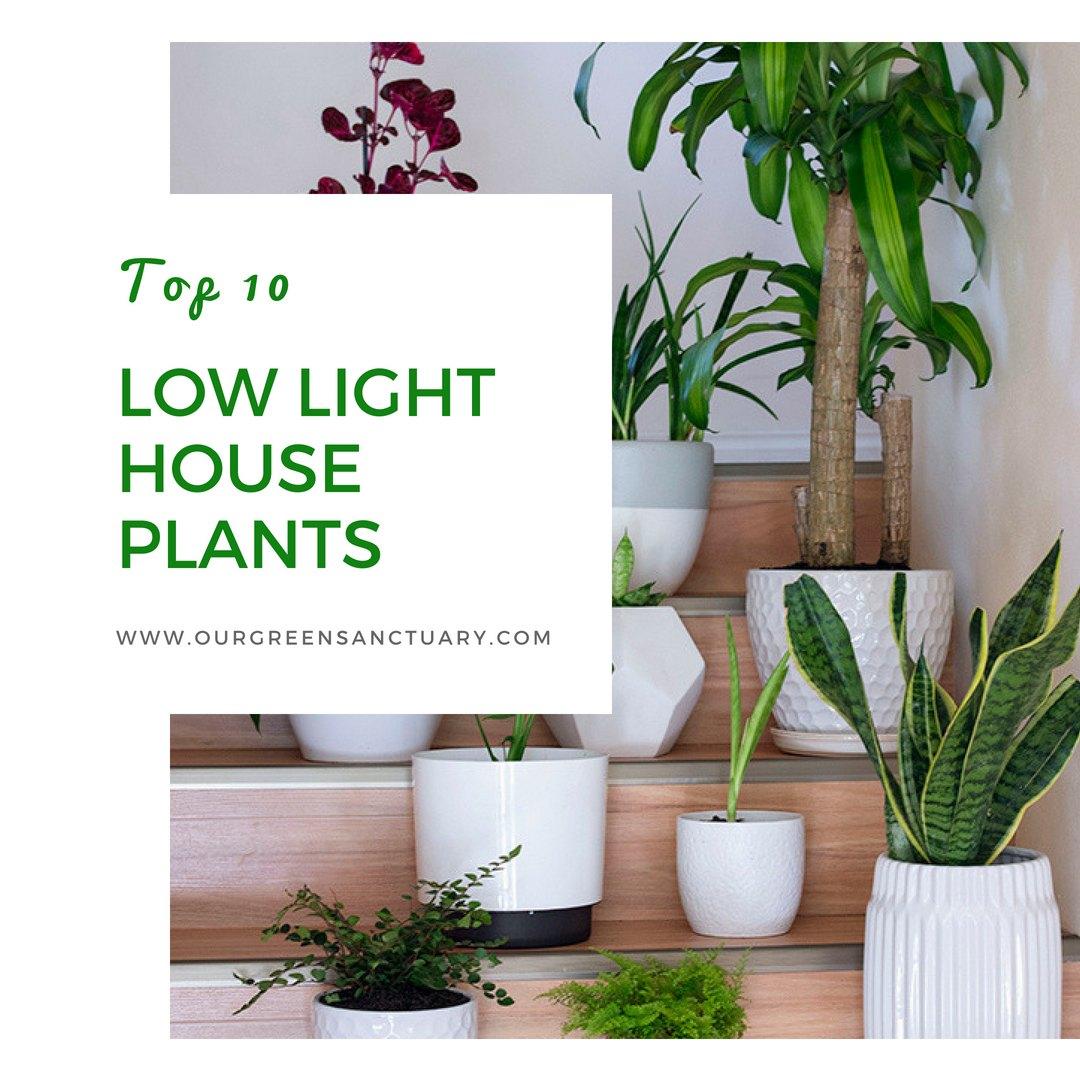 Best Low Light Plants For Bedroom: Top 10 Low Light Houseplants