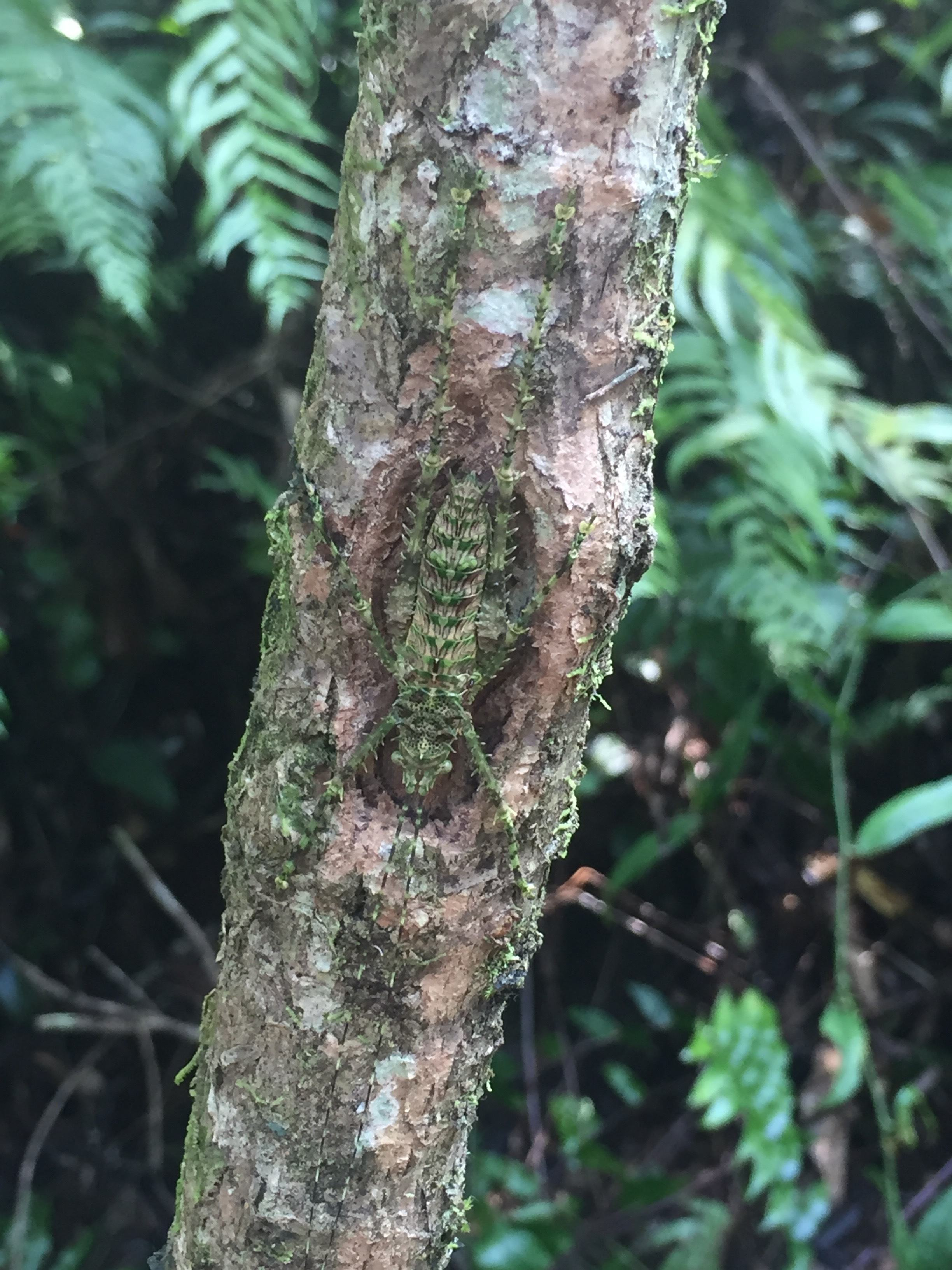 Insects camouflage on the tree bark