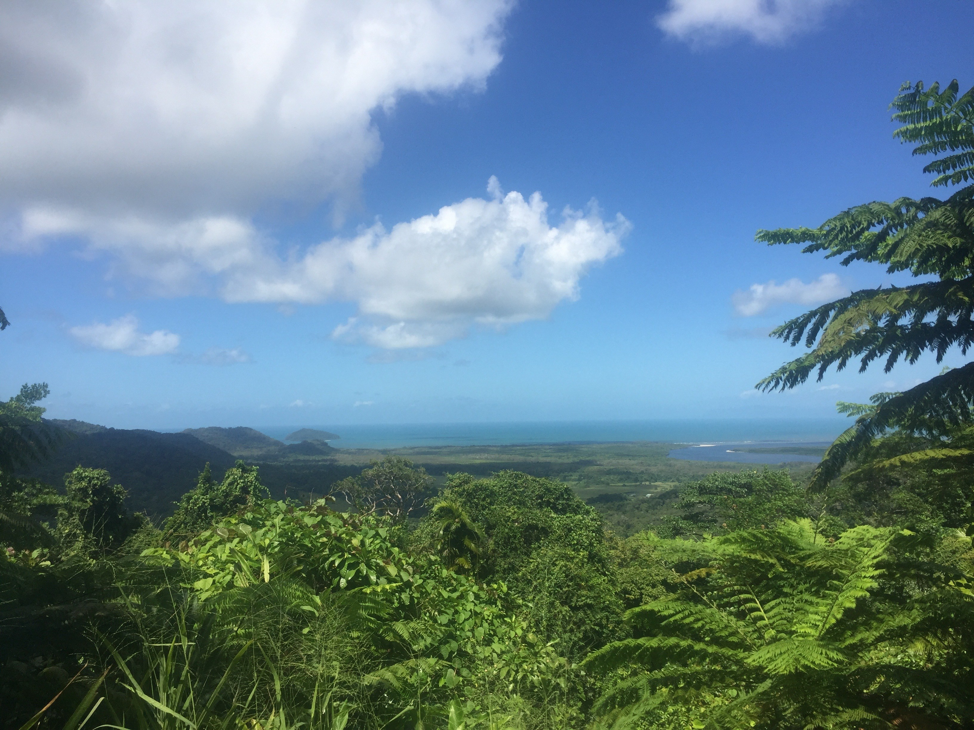 The Daintree Rainforest lookout