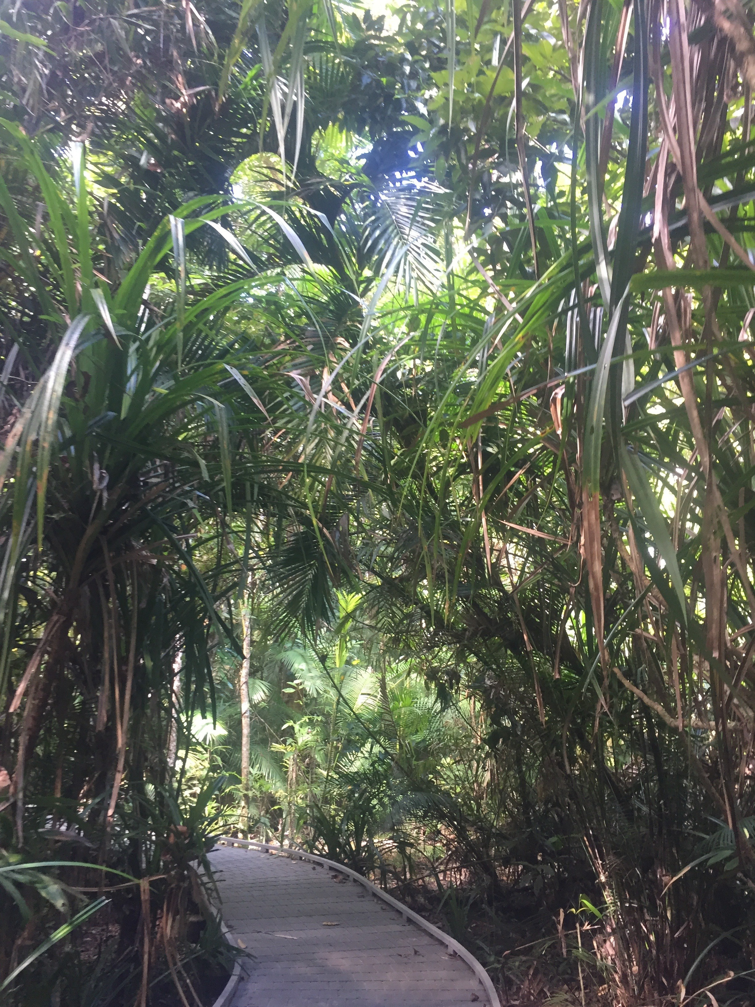 A walking track in the Daintree rainforest