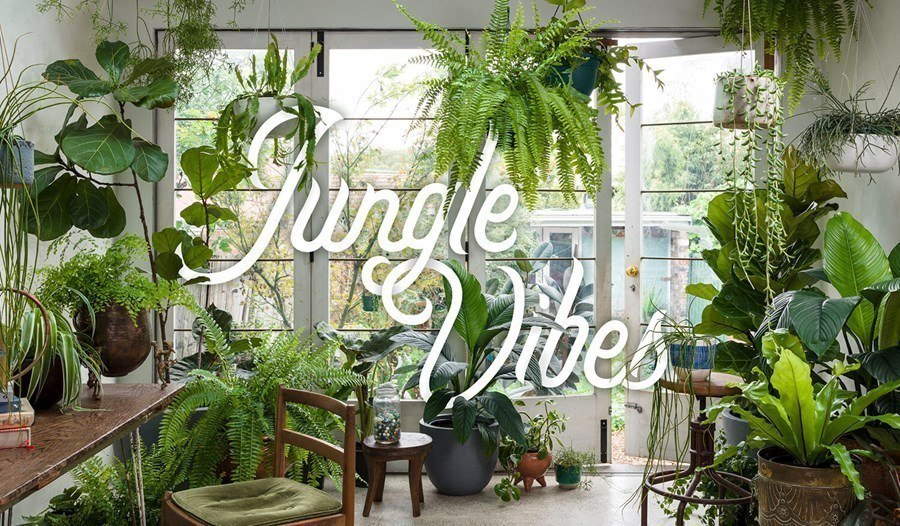 Plant life balance Jungle Vibes
