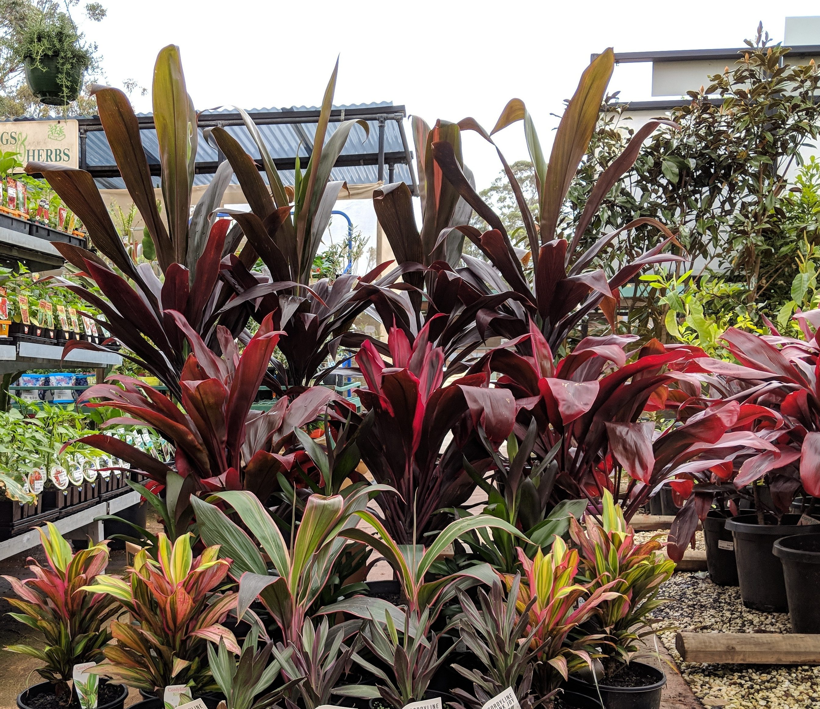 Top 10 tropical plants for around the pool | Our Green ...