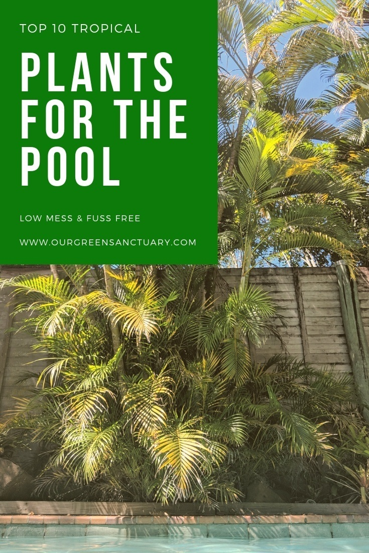 Top 10 tropical plants for around the pool